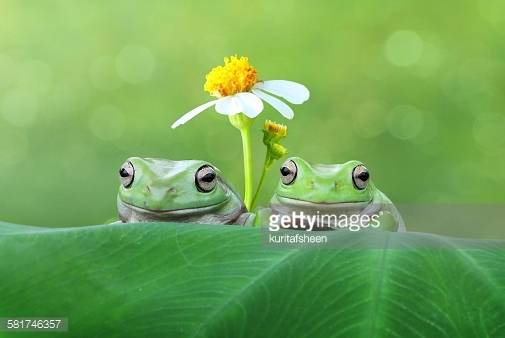 Frogs (GettyImages)